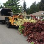 tree-services-qualicum-parksville-coombs-errington-nanoose (10)