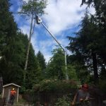 tree-services-qualicum-parksville-coombs-errington-nanoose (11)