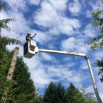 tree-services-qualicum-parksville-coombs-errington-nanoose (12)