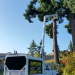 tree-services-qualicum-parksville-coombs-errington-nanoose (17)