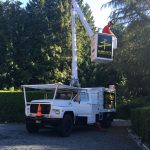 tree-services-qualicum-parksville-coombs-errington-nanoose (4)