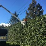 tree-services-qualicum-parksville-coombs-errington-nanoose (7)
