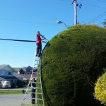 tree-services-qualicum-parksville-coombs-errington-nanoose (9)