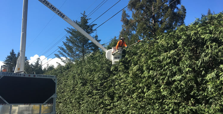 Hedge Trimming Services in Qualicum Beach, Parksville, Nanoose, Coombs.