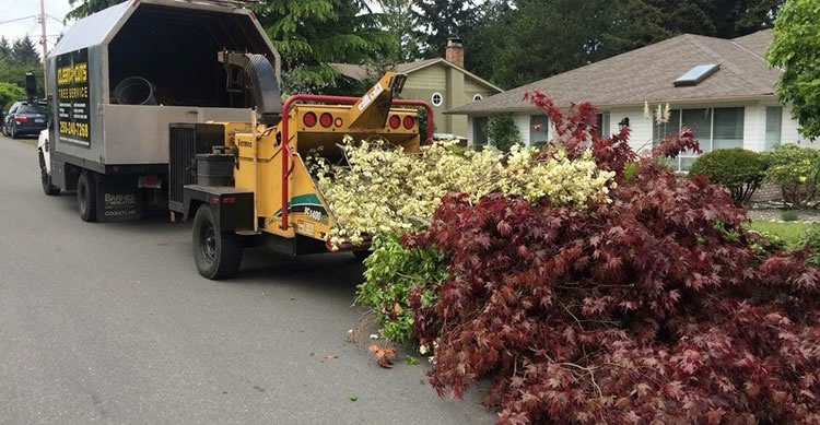 Lot Clearing Services Parksville, Qualicum and Nanoose.