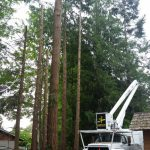 tree-services-qualicum-parksville-coombs-errington-nanoose (16)