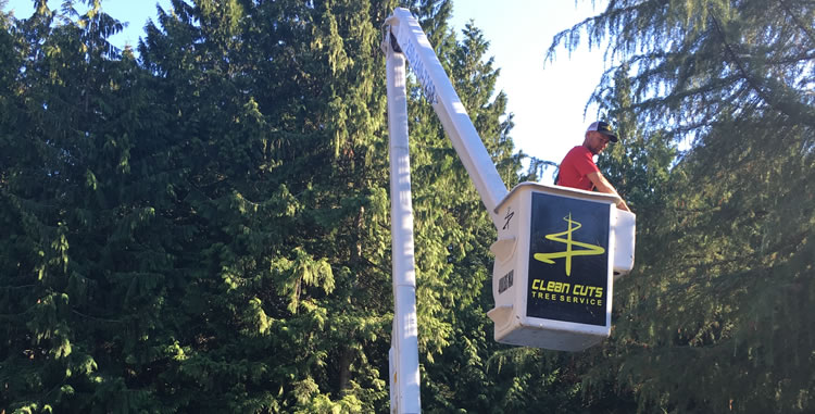 Tree Trimming Services in Qualicum, Parksville and Nanoose, BC.